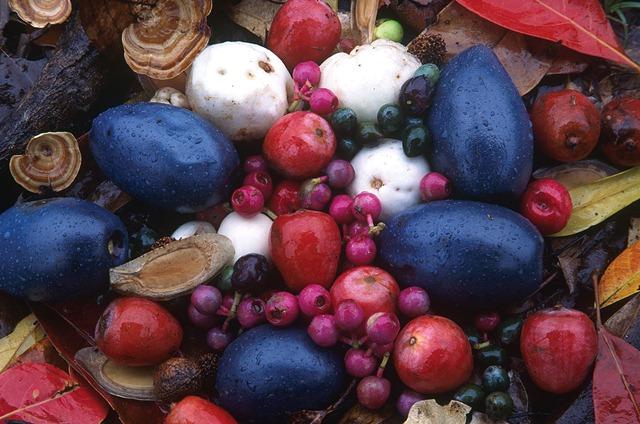Diet and Ecology | cassowaryrecoveryteam