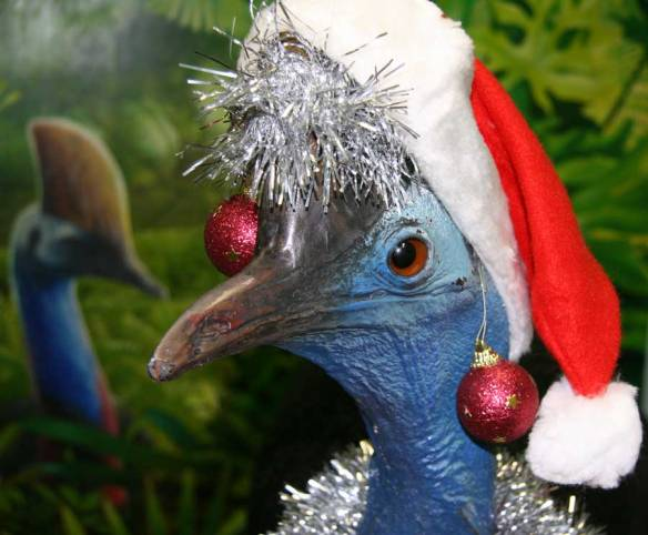 Christmas-cassowary-004